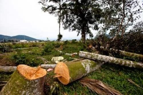 Homem morre atingido por árvore durante derrubada em sítio na BR-364